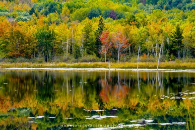 The colors were in full force, a beautiful reflection in the lake. This was in Acadia National Park, Maine